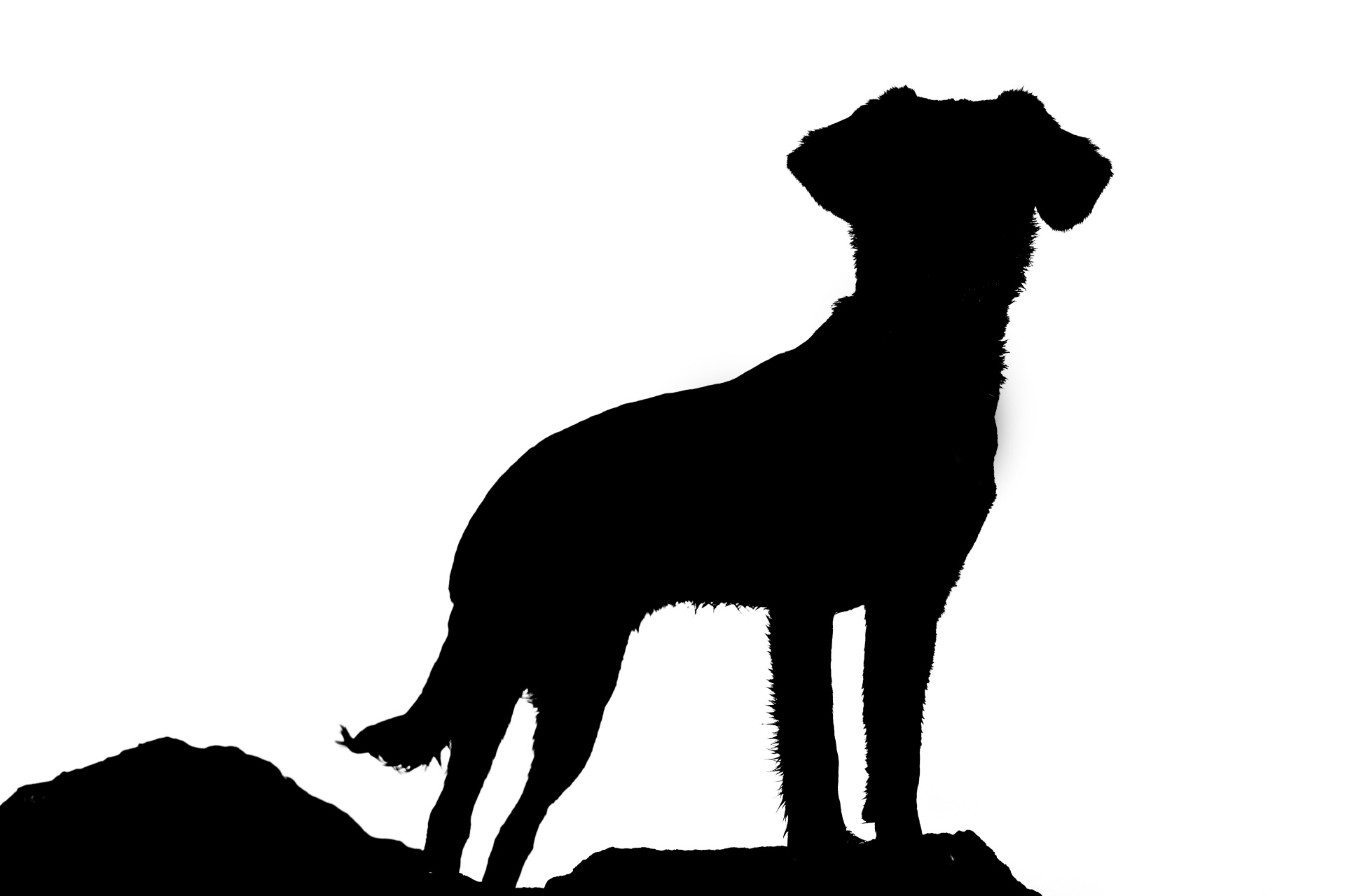 silhouette-of-dog-1484326255whv